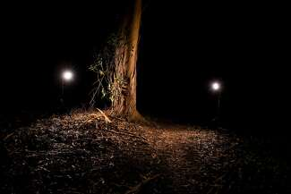 Strobe lights illuminate the site of Jae Stevens' murder scene near Spreckels Lake at Golden Gate Park in San Francisco.