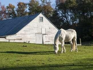 A Dutchess County horse farm