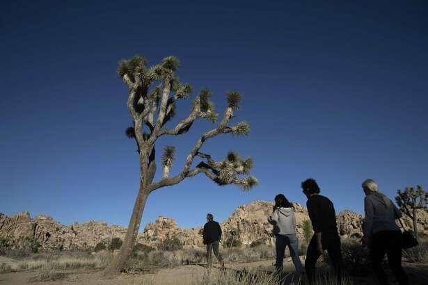 People visit Joshua Tree National Park in Southern California's Mojave Desert on Thursday.