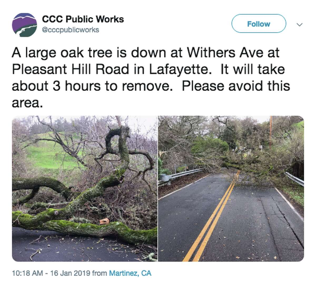 CCC Public works tweeted photos of an oak tree down at Withers Ave at Pleasant Hill Road in Lafayette on Jan. 16, 2019. The area should be avoided.