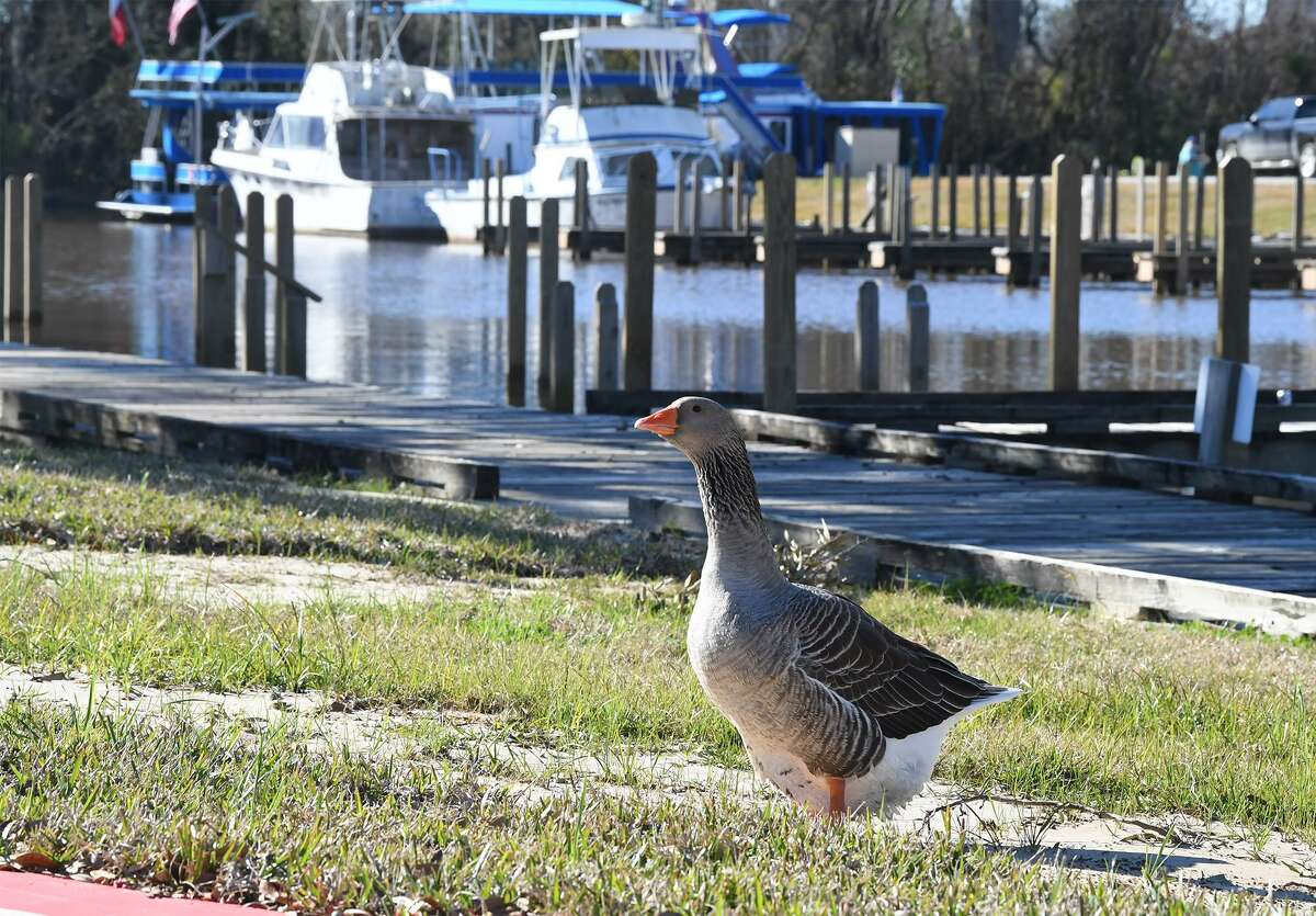 Several boats are docked at Beaumont RV Marina on Thursday. The business opened in December and now rents RV space as well as leasing boat slips. Photo taken Thursday, 1/10/19