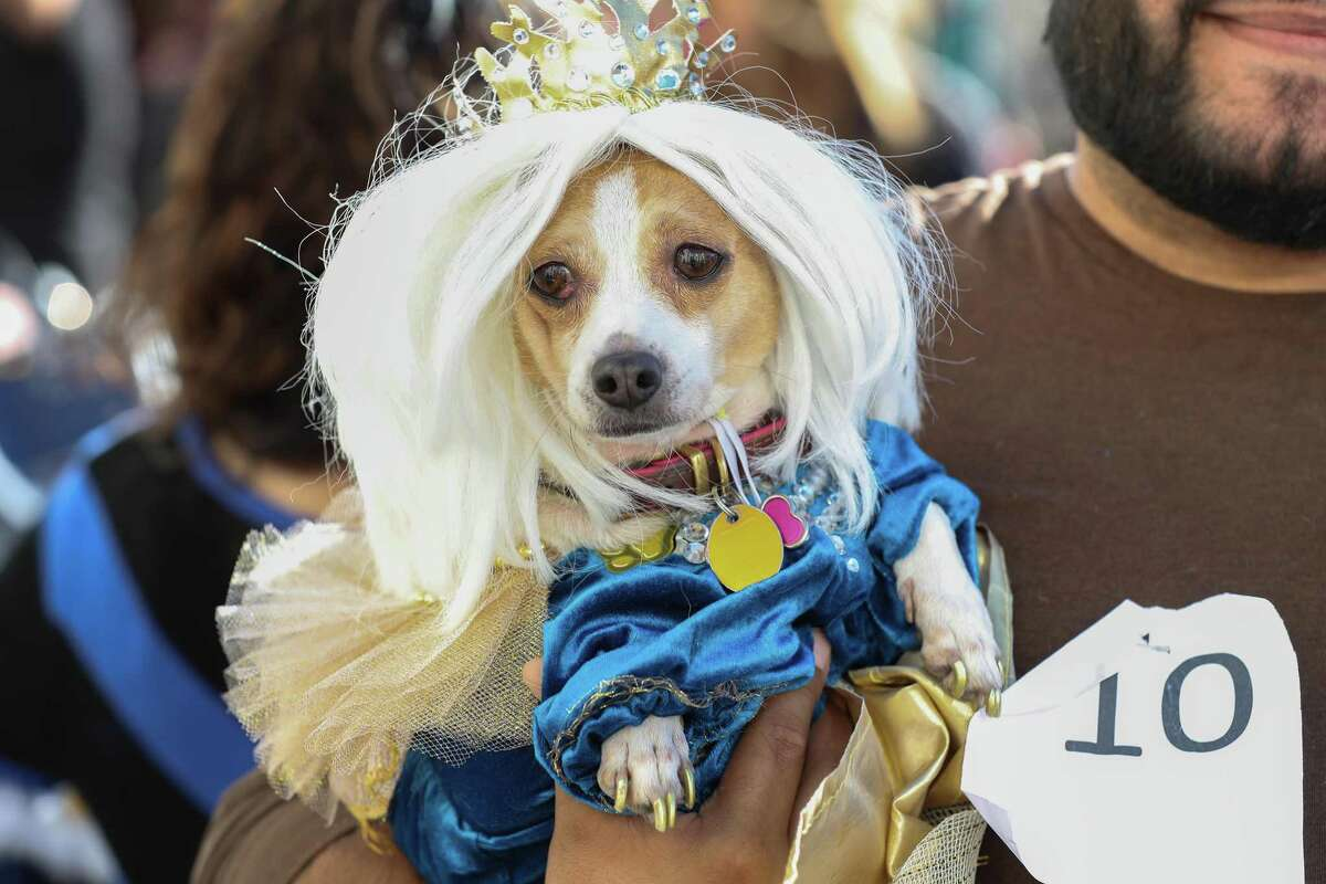 """""""Hazel Grace"""" was crowned the winner of the Museum of Fine Arts, Houston's Royals Doggie Day celebration paw-rade."""