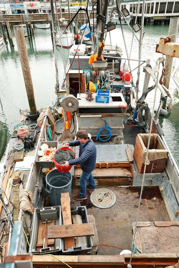 There will be no commercial herring catch in SF Bay this year