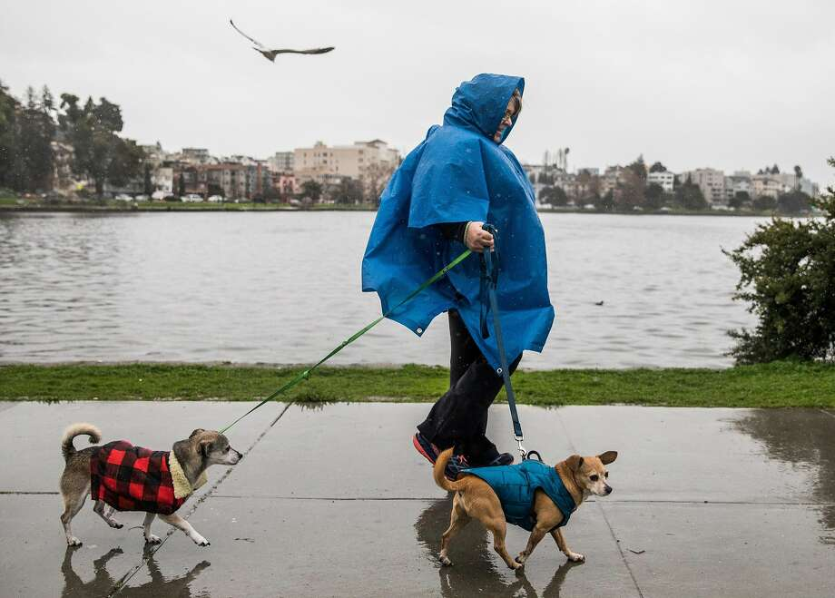 FILE -- Chris Butler of Oakland walks her two dogs Mac (left) and Sammy around Lake Merritt during a heavy rain storm in Oakland, Calif. Wednesday, Jan. 16, 2019. Friday's storm didn't pack the wallop most meteorologists were predicting, but more rain is expected for the Bay Area by Saturday afternoon. Photo: Jessica Christian / The Chronicle