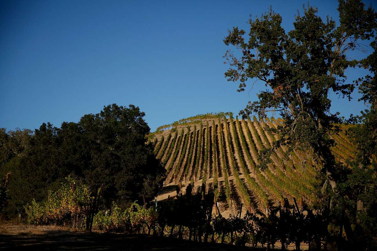 The vineyards at Seavey Vineyard in St. Helena, Calif., on Monday, October 12, 2015.