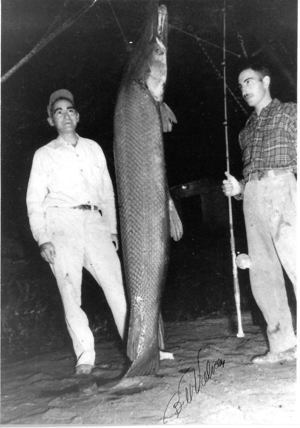 Bill Valverde, holding rod-and-reel, and his father Trinidad Valverde stand next to the 279-pound alligator gar Valverde caught from the Rio Grande in 1951. The 7-foot, 9-inch gar is the heaviest freshwater fish documented taken on rod-and-reel in Texas, the longest-standing Texas freshwater fish record and holds the world record for rod-and-reel-caught alligator gar, the second largest freshwater fish in North America.