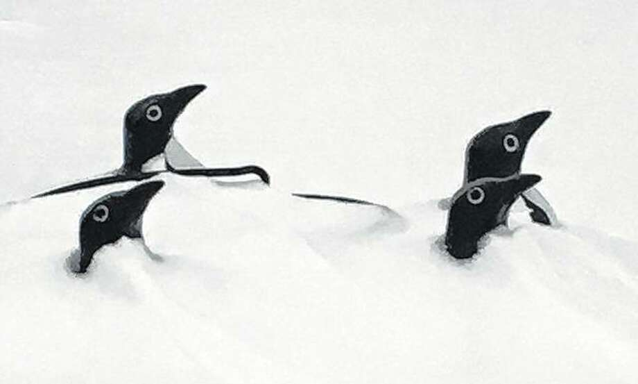 Plastic penguins pop up from snow lingering in west-central Illinois. Although they are artificial, another blast of winter storms through this weekend could have people thinking the birds are finding this region more suited to their love of the cold. Photo: Joy Harris | Reader Photo
