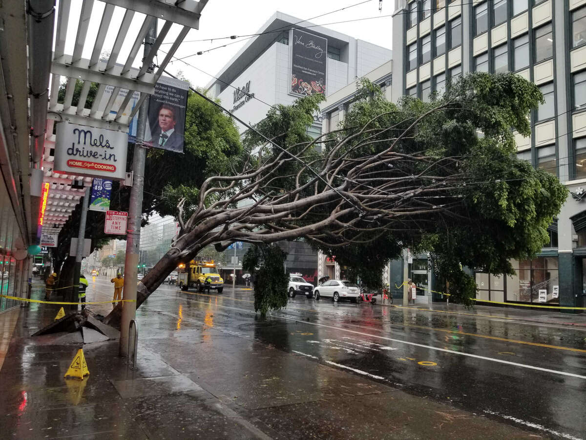 A large tree fell outside the Mel's Drive in on Mission Street near 4th Street in San Francisco on Thursday morning, Jan. 17, 2019.