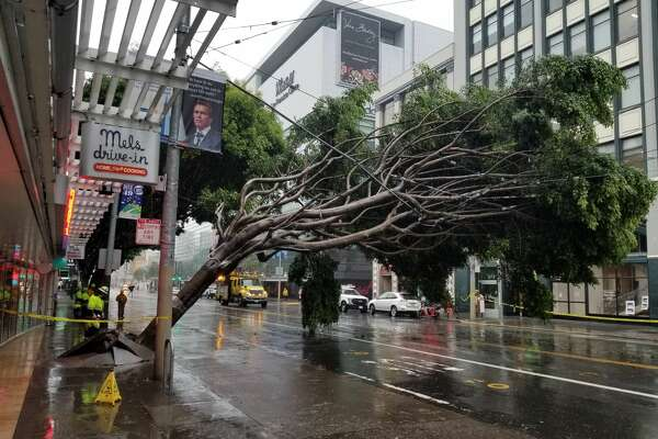 Workers inspect damage after a large tree fell on Muni lines on Mission St. near 4th St. in San Francisco on Thursday, Jan. 17, 2019.