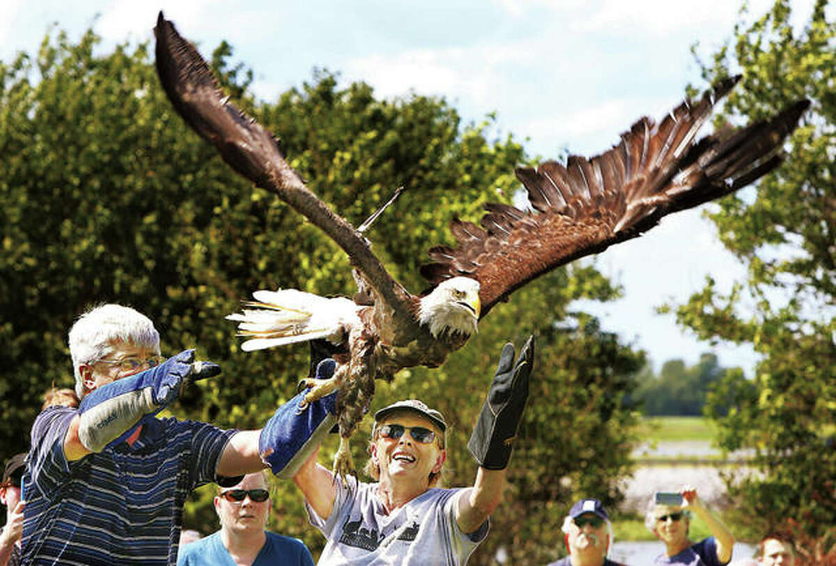Dr. Paul Myer, left, and TreeHouse Wildlife Center executive director Adele Moore, right, release a mature bald eagle back into the wild after it had been operated on at the center for an injury. The eagle had been injured and operated on by Dr. Myer.