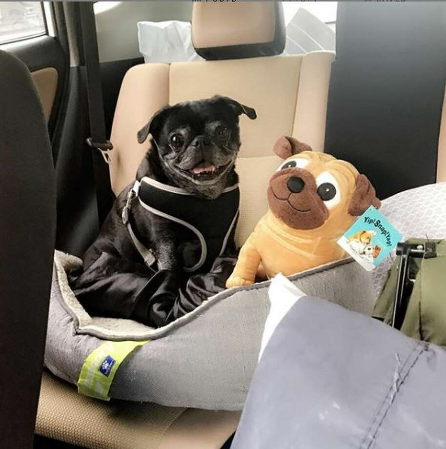 A new bill has been filed to protect people who break into cars to rescue household animals.  Photo: Photo Courtesy Rebecca Hennes