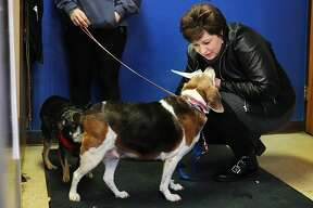 Midland resident Robin Liphard greets a Beagle named Bebe, center, before signing foster care paperwork and taking Bebe home on Friday, Jan. 18, 2019 at the Humane Society of Midland County. (Katy Kildee/kkildee@mdn.net)