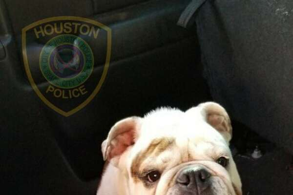 A Houston family can thank diligent police officers for reuniting them with their family dog after a burglary in December.