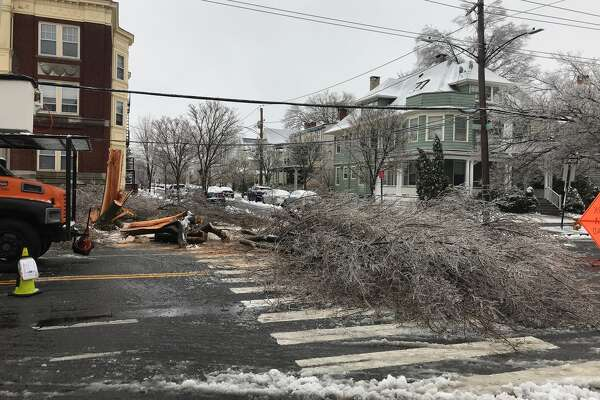 A tree down at the intersection of Avon and Orange streets in New Haven on Sunday, Jan. 20, 2019.