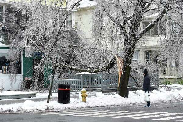 An ice covered tree limb fell onto a house and blocked the sidewalk at the corner of Canner and Orange Street in New Haven on January 20, 2019.