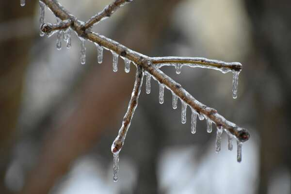 Ice forms on trees in Seymour, Conn. on January 20, 2019