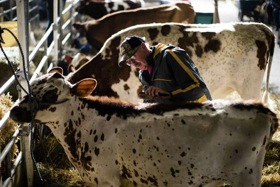 A New Canaan entrepreneur has raised $1.3 million to develop probiotics for livestock, with the company using the funds to expand its lab at a University of Connecticut facility in Farmington, Conn. (AP Photo/Matt Rourke) Photo: Matt Rourke / Associated Press / Copyright 2019 The Associated Press. All rights reserved.