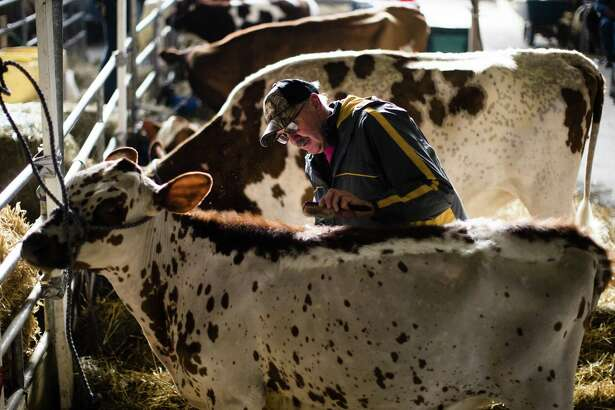 A New Canaan entrepreneur has raised $1.3 million to develop probiotics for livestock, with the company using the funds to expand its lab at a University of Connecticut facility in Farmington, Conn. (AP Photo/Matt Rourke)