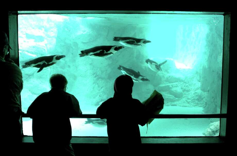 LIV 7-8-05 AARON FLAUM Mystic Aquarium visitors watch the penguins at the Penguin Pavilion. Aaron Flaum/ Register (7-8-05)