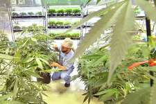 """Wethersfield Police Chief James Cetran, who is also president of the Connecticut Police Chiefs Association, said """"local law enforcement does not have the resources to deal with the legalization of recreational marijuana."""""""