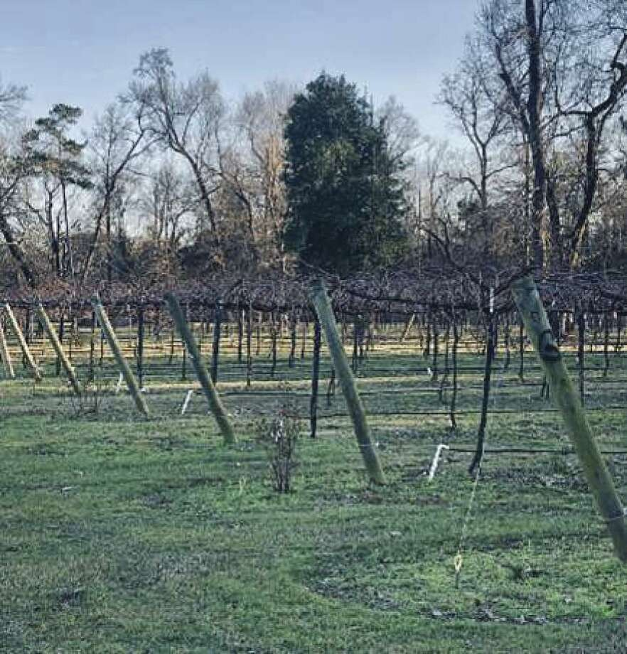 Wild Stallion Vineyard on West Rayford Road hosts a pruning seminar on Feb. 9.