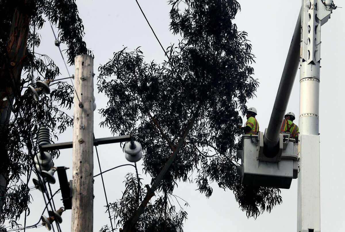 Davey Tree Service employees cut branches off a hundred foot tall eucalyptus tree in Oakland Tuesday November 29 2011. PG&E has hired PG&E has hired dozens of tree service companies to keep their power lines clear of falling branches throughout the Bay Area, This preparation is for an upcoming windstorm expected to bring 30-60mph winds to the Bay Area in the next couple days