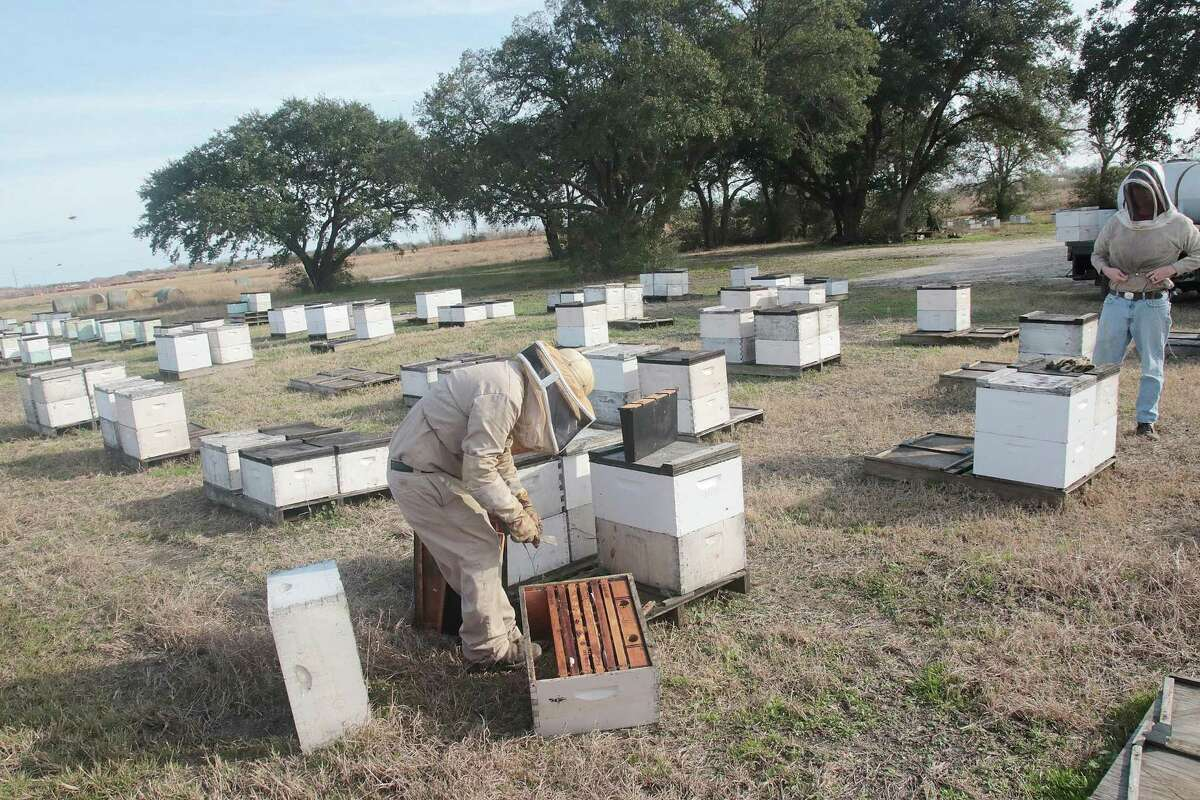 Workers visit hives at Stroope Farm.
