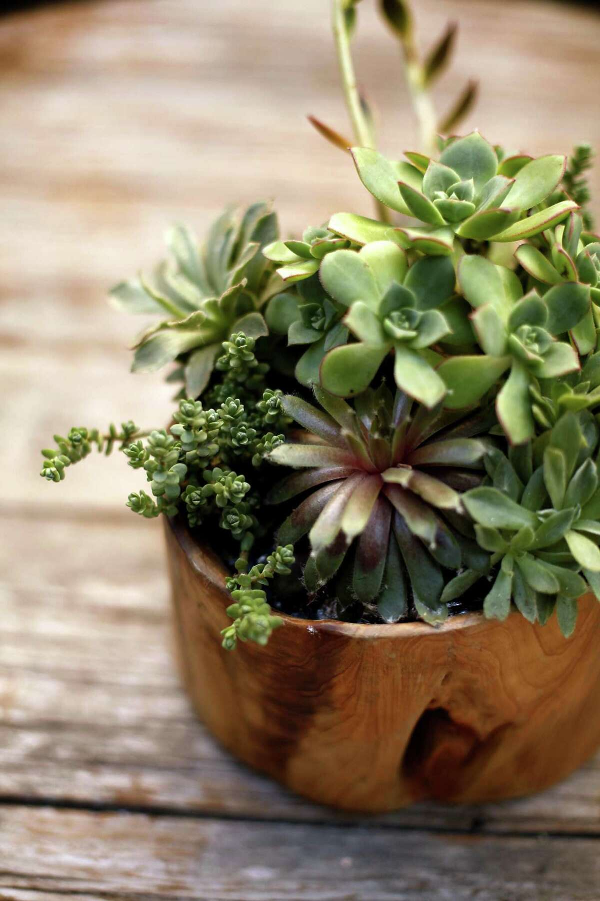 A wild and woody succulent planter