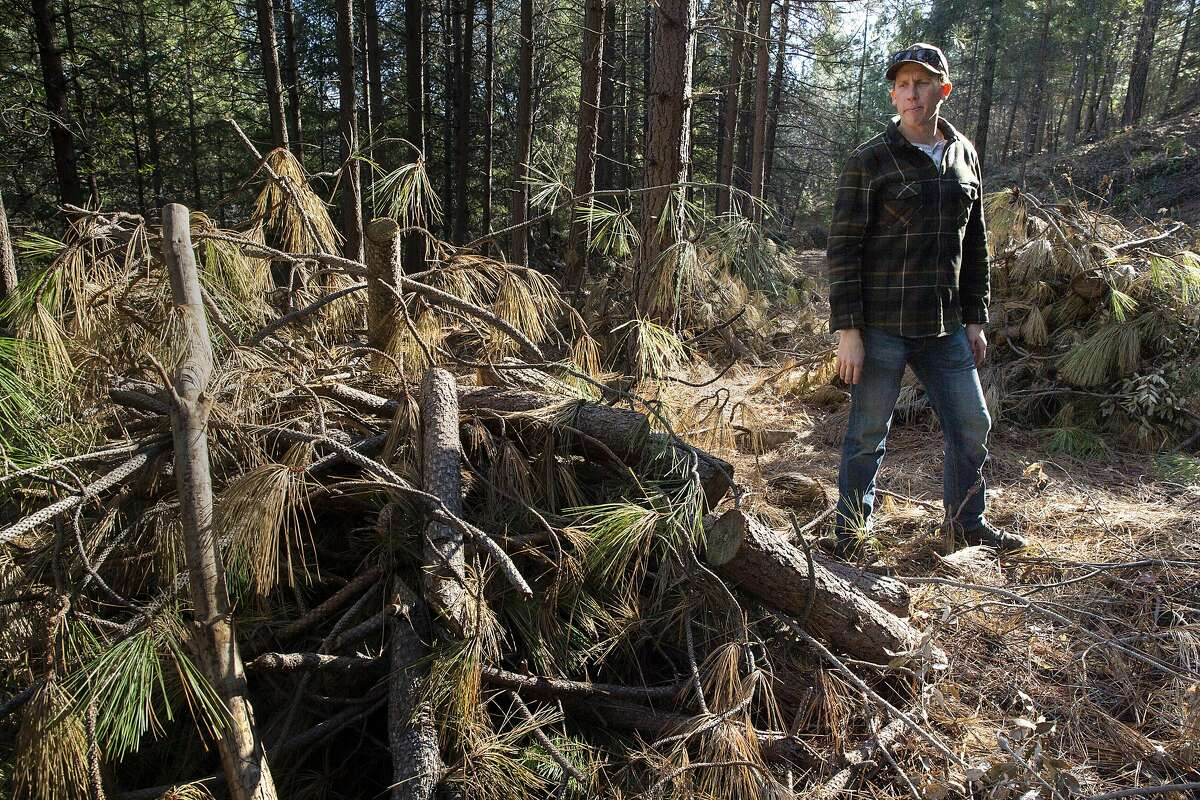 Terra Fuego executive director Steve Graydon checks out the unburned slash piles along a fuel break off of Dole Mill Ridge on Wednesday, Jan. 23, 2019, in Forest Ranch, Calif. The Terra Fuego project included a 100-acre shaded fuel break and 125-acre prescribed burn. The treatment is to improve the Butte Creek Watershed and local homes by protecting it against wildfires. The project is stalled because of the government shutdown.