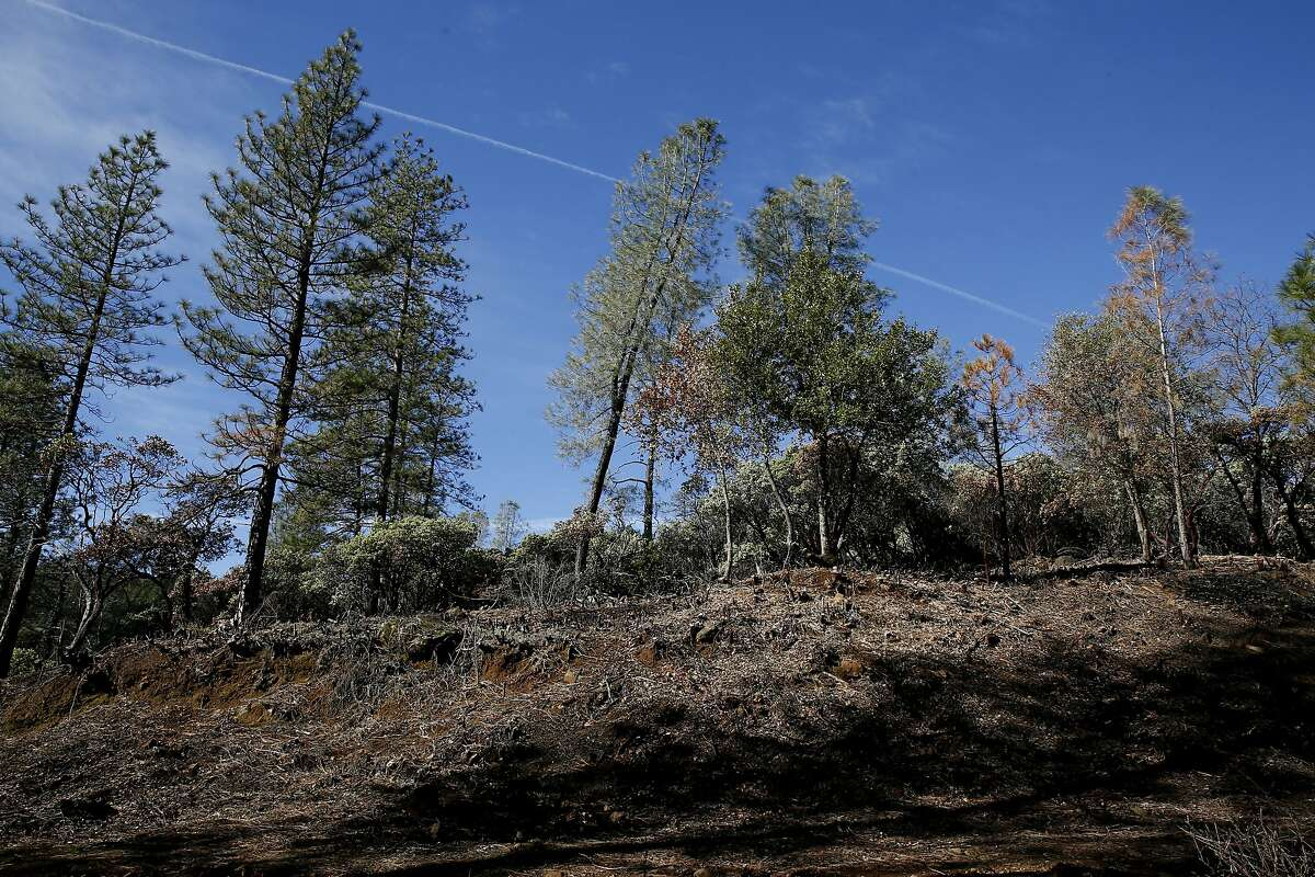 The fuel break off of Dole Mill Ridge on Wednesday, Jan. 23, 2019, in Forest Ranch, Calif. The Terra Fuego project included a 100-acre shaded fuel break and 125-acre prescribed burn. The treatment is to improve the Butte Creek Watershed and local homes by protecting it against wildfires. The project is stalled because of the government shutdown.