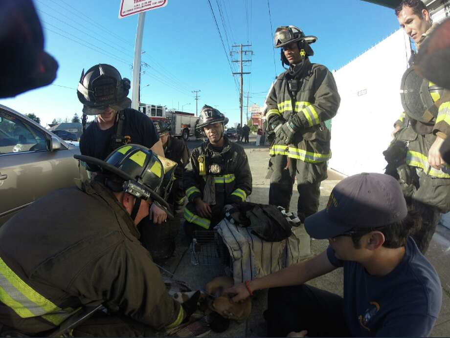 Oakland firefighters rescued three puppies from a structure fire. Photo: Oakland Fire Live