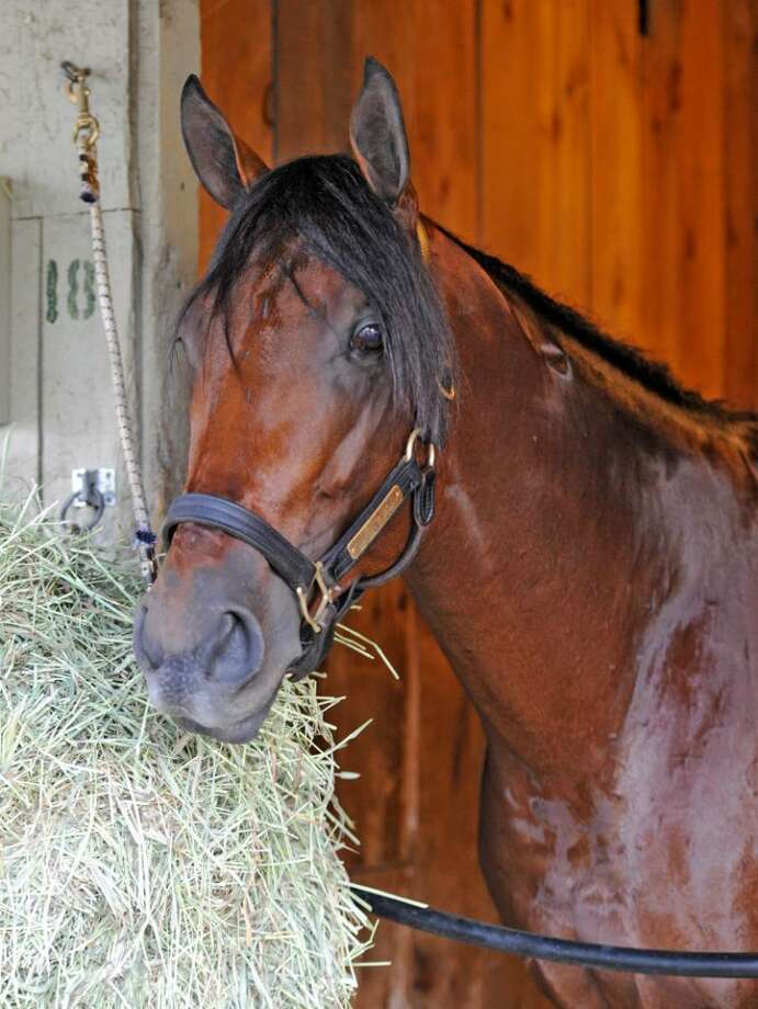 Quality Road, in his stall at the Oklahoma Training Track at Saratoga Race Course, has a busy summer scheduled at the Spa. The plan is for him to run in the Whitney on Aug. 7 and the Woodward on Sept. 4. Last year, he won the Amsterdam in track-record time but was a disappointing third as a beaten favorite on a sloppy track in the Travers. (Skip Dickstein/Times Union) Photo: Skip Dickstein / 2008