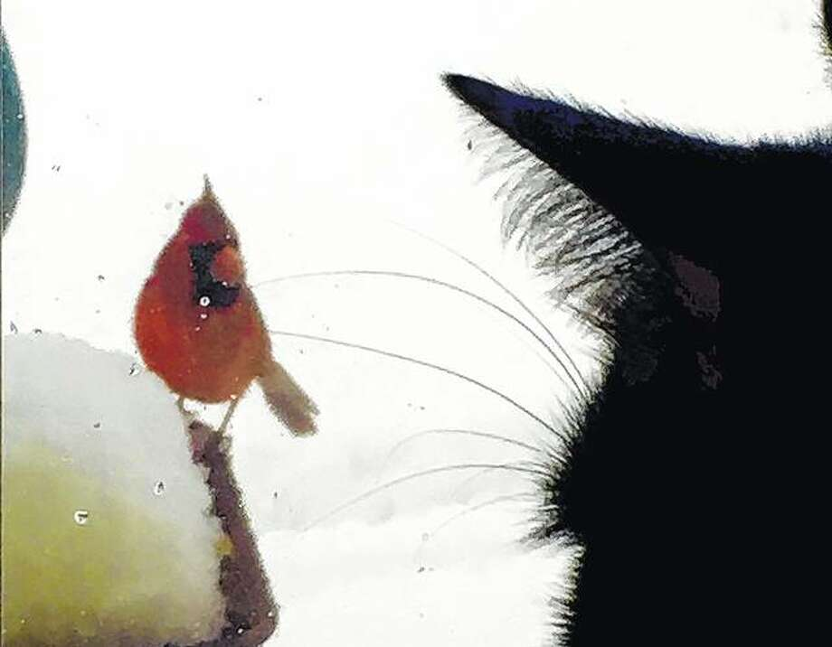 Bella the cat and a cardinal stare one another down through a window.