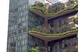 Perched like shelf fungi on a tree, these hanging gardens ornament the Parkroyal Hotel in Singapore.