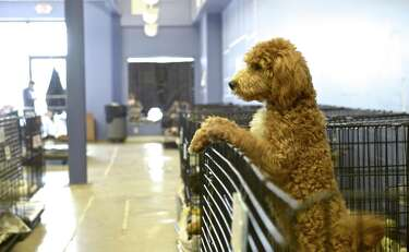 Danbury lawmakers push for 'puppy mill' bill - Connecticut Post