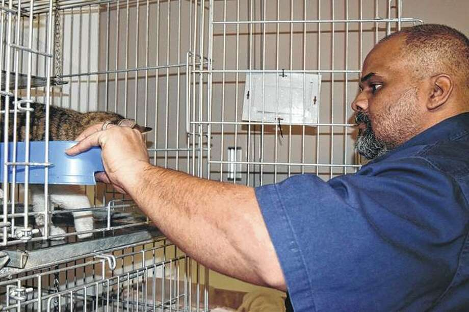 L.C. Clinton, an animal control officer for the Morgan County Animal Control, prepares cat kennels Monday at the Morgan County Animal Shelter. Photo: Samantha McDaniel-Ogletree | Journal-Courier