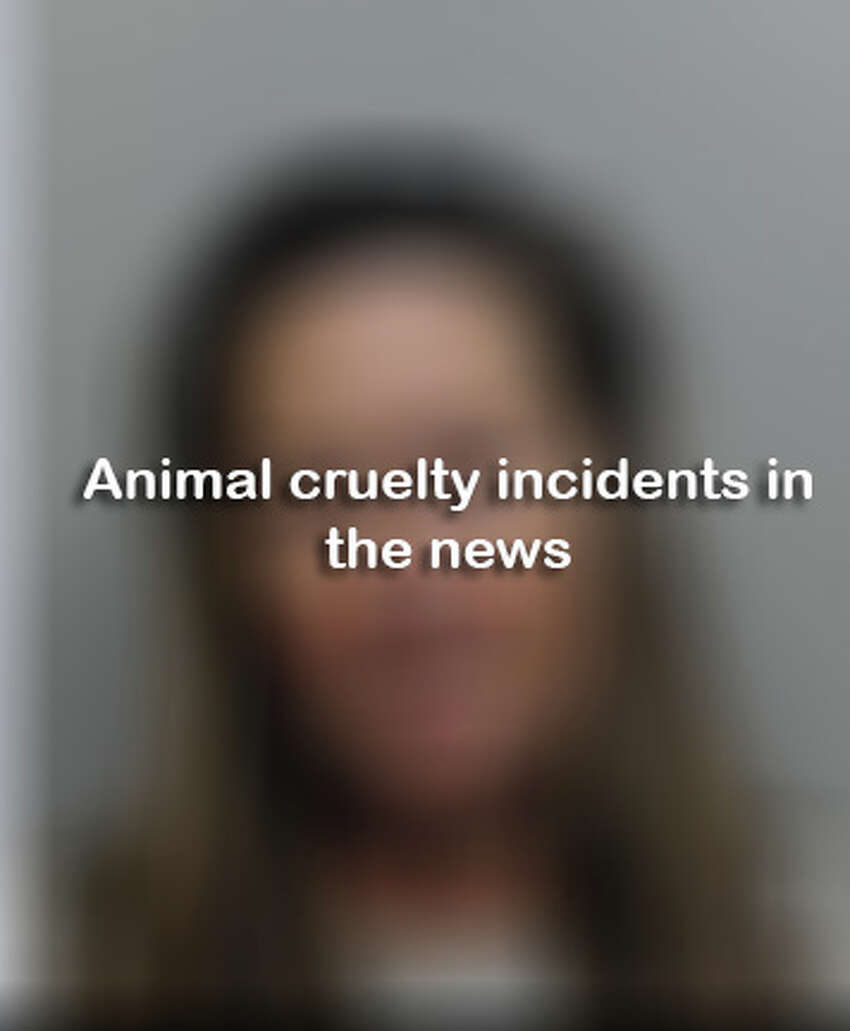 Animal cruelty incidents in the news