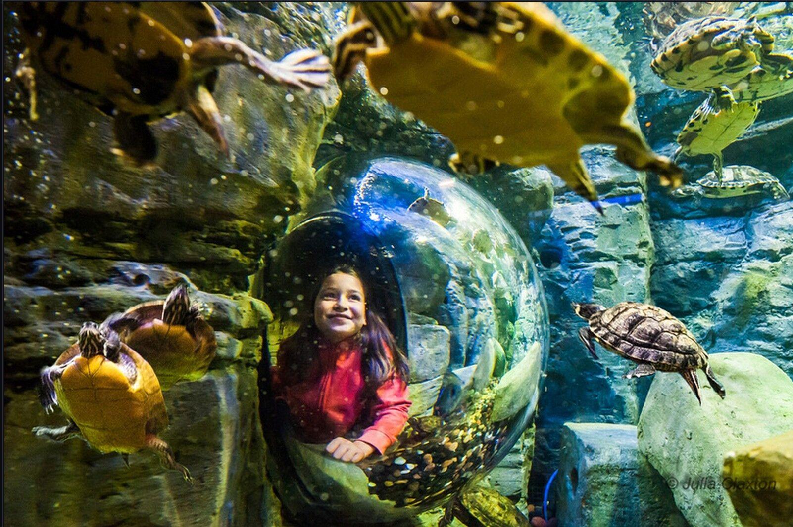 San Antonio's newest aquarium shares construction update