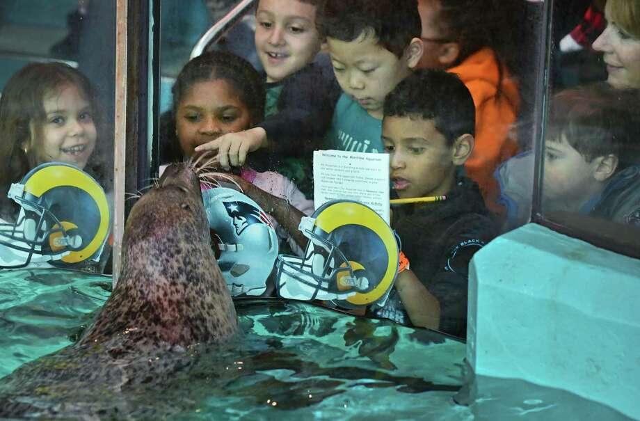 Students on a school visit in January 2019 to Maritime Aquarium in Norwalk, Conn. Photo: Erik Trautmann / Hearst Connecticut Media / Norwalk Hour