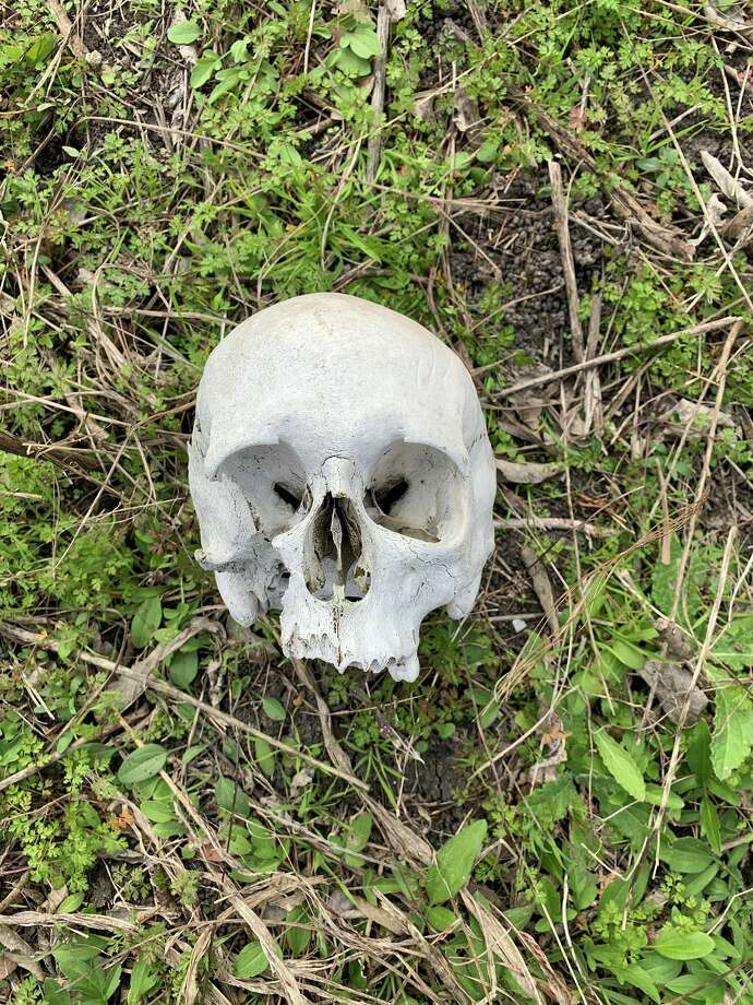 Ky Sandelovic found this human skull while on a bathroom break near New Braunfels Tuesday Jan. 29, 2019 and called police. Photo: Ky Sandelovic