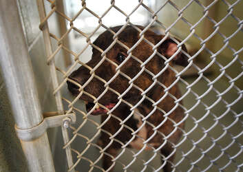 Adoption fees waived at Bridgeport animal shelter for one weekend