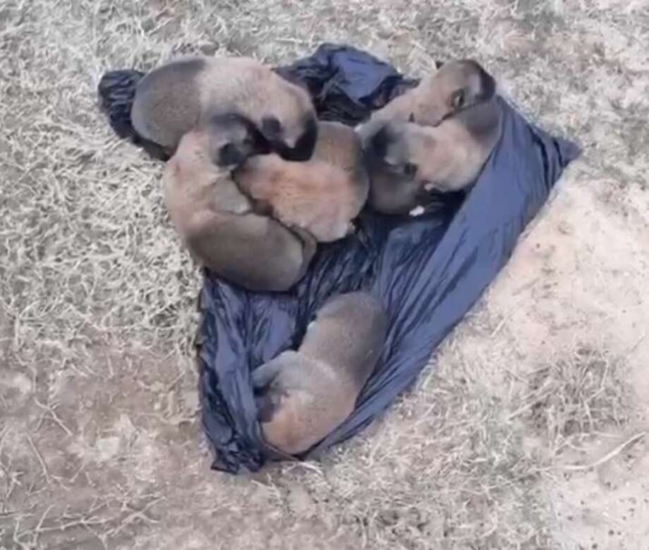 A bag of puppies was tossed out of a car window to the side of a road in Spring Thursday. Officials said they are looking into the incident and that a cruelty report has been filed. Photo: Harris County Animal Shelter