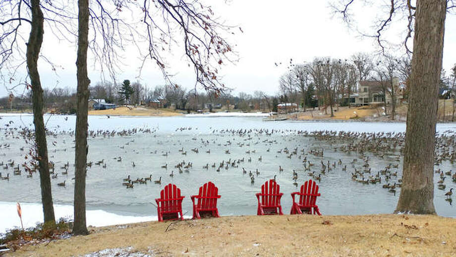 """Plenty of Snow and Canada geese along with a few Wood Ducks frolic about Thursday morning at Dunlap Lake in Edwardsville. Resident Laurie Bonk said she saw roughly 40 swans at the lake from her backyard earlier that day. """"I've never seen so many swans on the lake. It must be because of the cold weather,"""" she said. Bonk said she grew up near the lake and moved back to the area with her husband 12 years ago. A number of area schools canceled classes Thursday due to unsafe road conditions following below-zero temperatures that swept in from the north. Photo: Melissa Pitts 