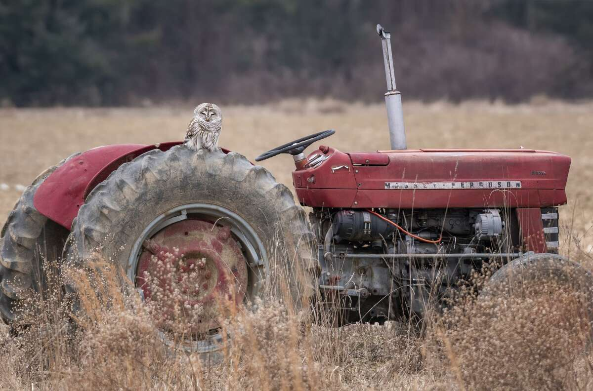 A barred owl sits on a tractor in Windsor. Photo submitted by Brian Kulvete.