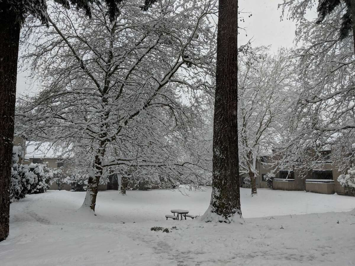 A snowy scene in Lynnwood, Monday, Feb. 4, 2019.