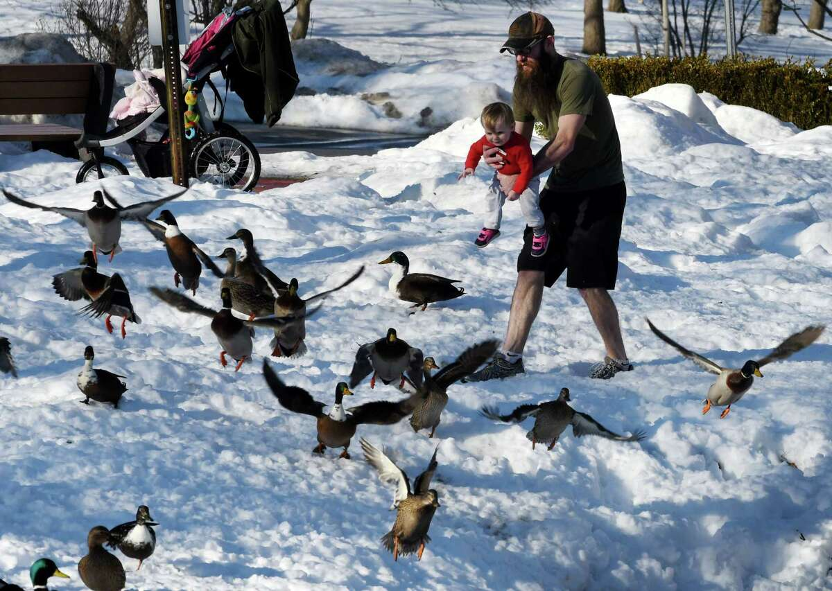 Days of warm weather came to an end Wednesday and forecasters say the evening commute could be flawed by a messing mix of precipitation. In this photograph taken while it was still warm on Tuesday, Madilyn Healy, 14 months, of Saratoga Springs has a fun chasing after the ducks with her father, Daniel, at Congress Park on Monday, Feb. 4, 2019, in Saratoga Springs, N.Y. (Will Waldron/Times Union)