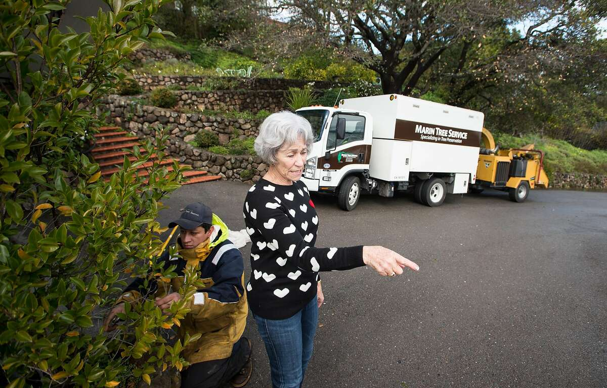 Homeowner Bille Going instructs Marin Tree Service employees where to trim back shrubs and brush at her home in San Rafael, California on February 04, 2019.