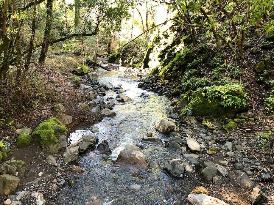 Winter rains have recharged Bear Creek in Sugarloaf Ridge State Park, a tributary to Sonoma Creek. Photo: Michael Pechner / Special To The Chronicle