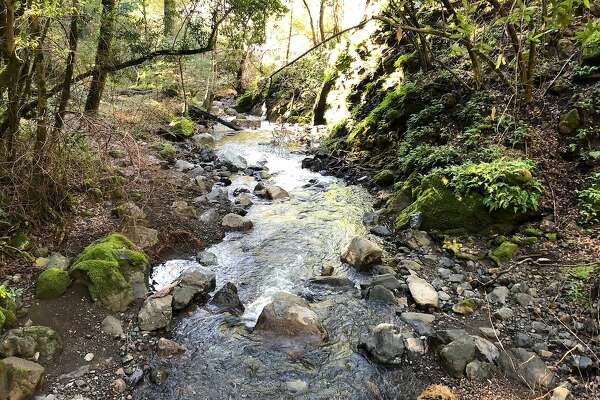 Winter rains have recharged Bear Creek in Sugarloaf Ridge State Park, a tributary to Sonoma Creek