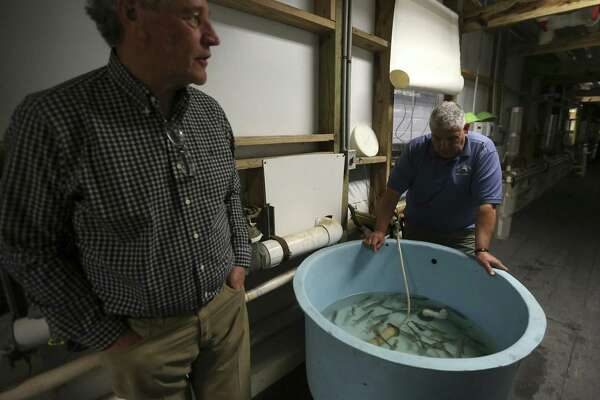 Updated: Texas-sized shrimp dream at long last proves viable